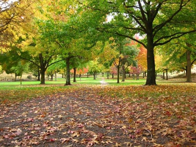 woodhurst park bracknell